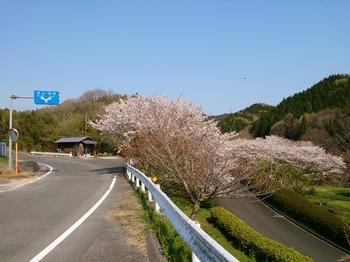 台桜R2 (10).jpg