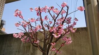 松末の春 (1).jpg